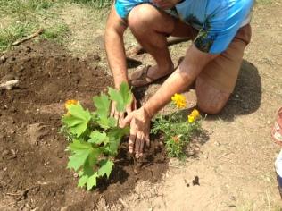 AC planting